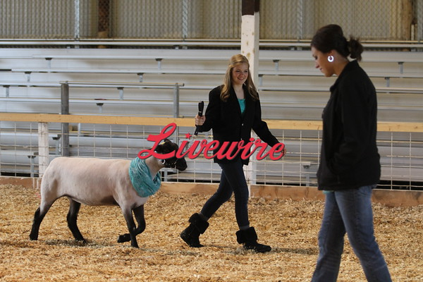 4H Sheep Show 2015